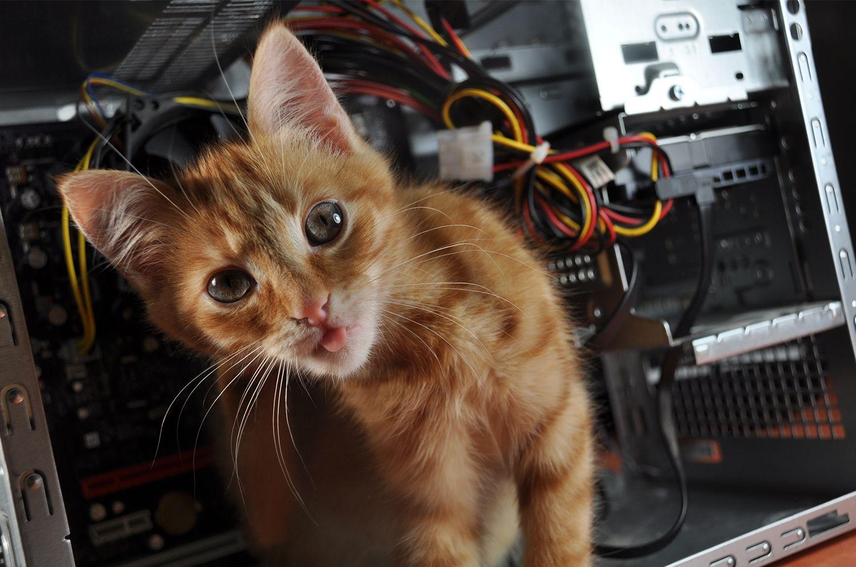 パソコンの中に入っているネコ